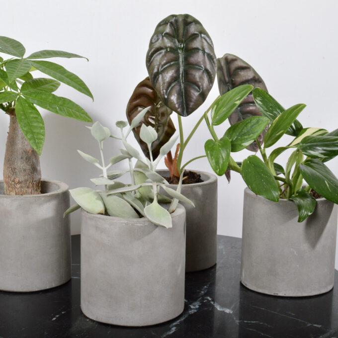 Plantepakke